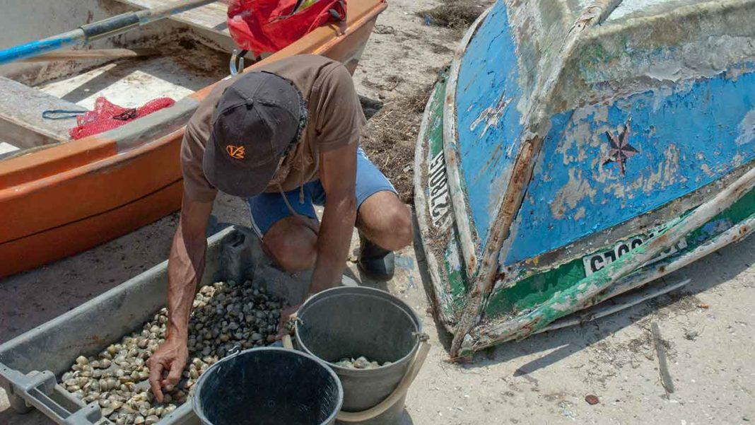 Coliformes fecais causam proibição de bivalves na Ria Formosa