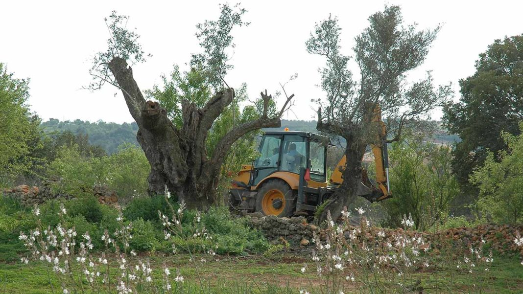 CDS questiona governo sobre abate de sobreiros no Caldeirão