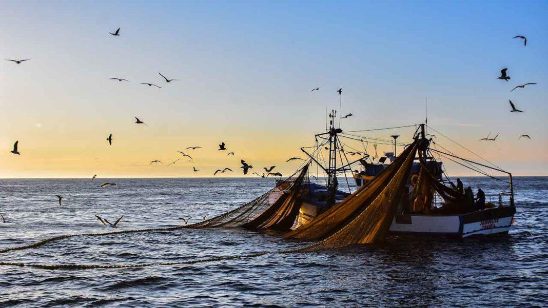 Portugal e Espanha pediram ao Conselho Internacional para a Exploração do Mar (ICES) a validação de uma regra de exploração precaucionaria para a pesca de sardinha para 2020.