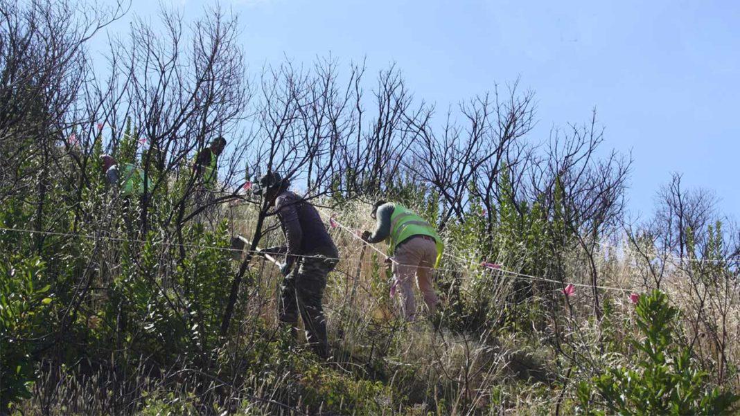 A Universidade de Évora e o Grupo de Estudos de Ordenamento do Território e Ambiente (GEOTA) assinaram um protocolo de colaboração mútua no início do mês de janeiro com o objetivo de criar sinergias entre os projetos de conservação que cada entidade coordena na serra de Monchique.