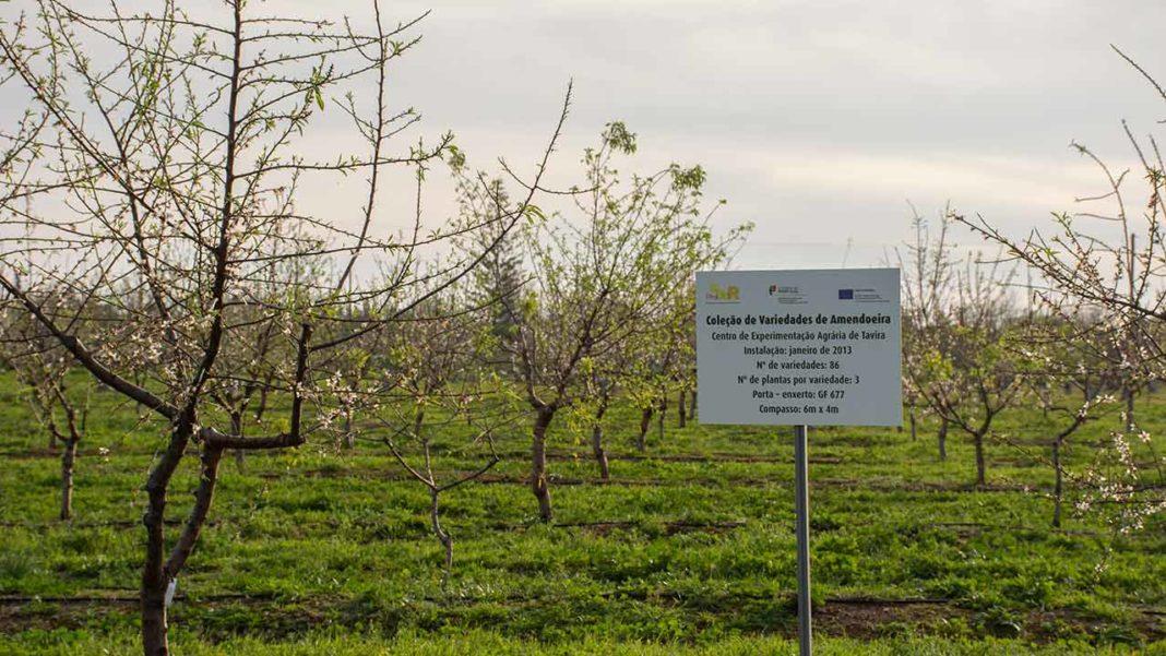 Questionada pelo barlavento, a Câmara Municipal diz que a estrada que vai cortar o terreno do Centro de Experimentação Agrária (CEA) de Tavira é uma obra da «inteira responsabilidade» da Infraestruturas de Portugal. O Instituto público, contudo, tem outra versão.