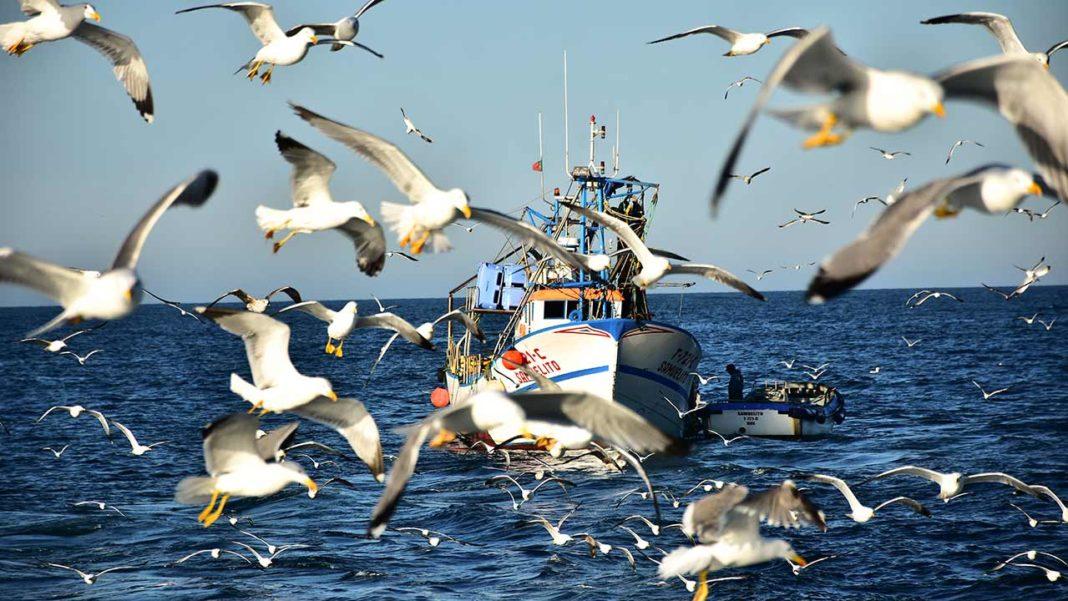 Instituto Português do Mar e da Atmosfera (IPMA) inicia campanha científica «PELAGO20» para avaliar biomassa da sardinha e do biqueirão.