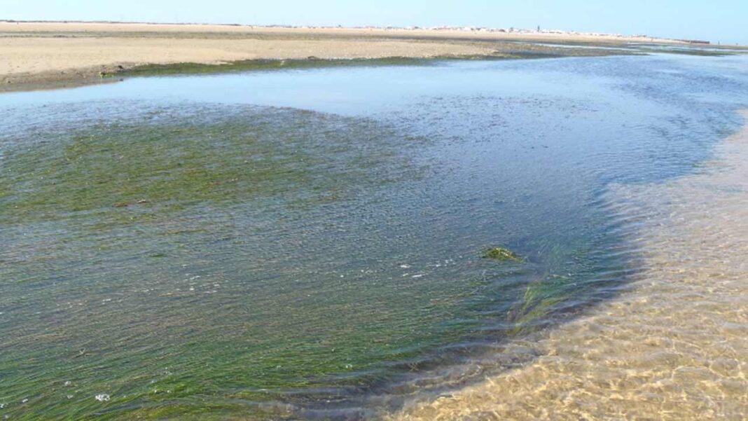 Num estudo recente, os investigadores do Centro de Ciências do Mar (CCMAR) concluíram que os efeitos das alterações climáticas, em particular do aquecimento oceânico, poderão beneficiar as plantas marinhas.