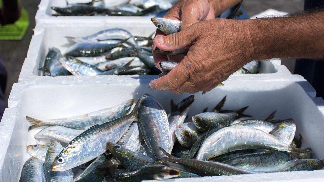 Como é do conhecimento corrente o sector das pescas a nível nacional atravessa momentos de grande dificuldade.
