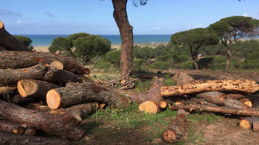 Empresa foi alertada ontem para movimentações no seu terreno, junto à praia do Ancão. Lisfina diz ter sido vítima de «atos de vandalismo».
