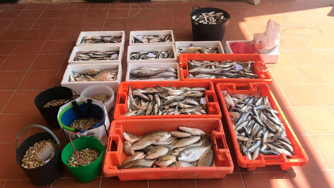 GNR pescado e bivalves Quarteira