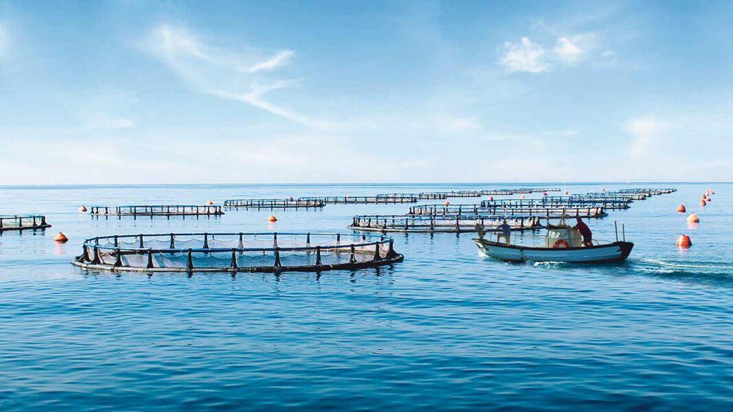 SONAE MC aposta no maior projeto nacional de aquacultura. Serão 900 toneladas de dourada do Algarve à venda nas lojas Continente em 2020.