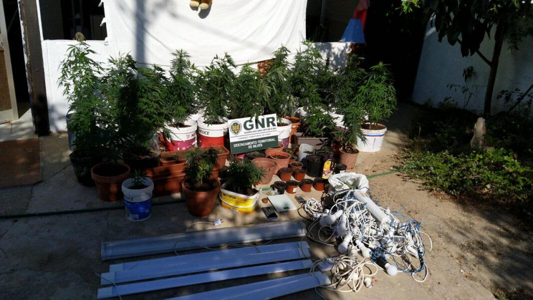 GNR detém homem que plantava cannabis em casa, em Caarvoeiro