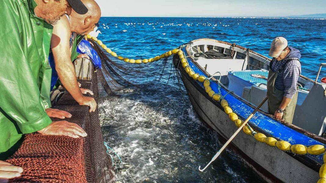 Está a decorrer a campanha de investigação Slipping 2020 cujo objetivo é avaliar a sobrevivência da cavala após rejeição pela pesca do cerco. Nesta campanha, uma equipa de investigadores do Instituto Português do Mar e da Atmosfera (IPMA) e do Centro de Ciências do Mar (CCMAR).
