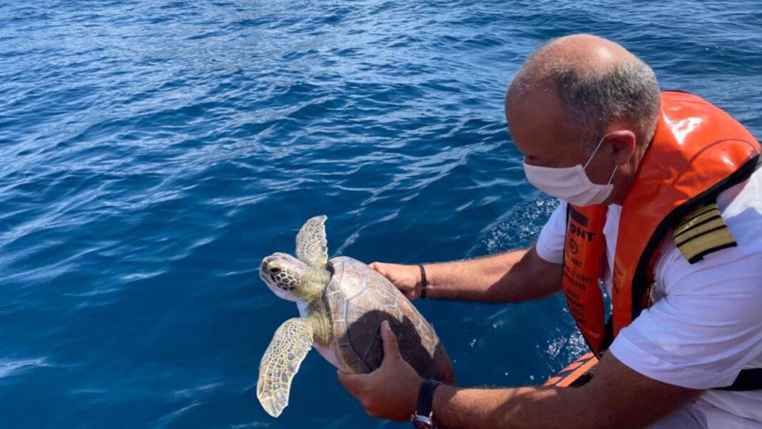 Zoomarine e Marinha devolvem tartarugas ao mar