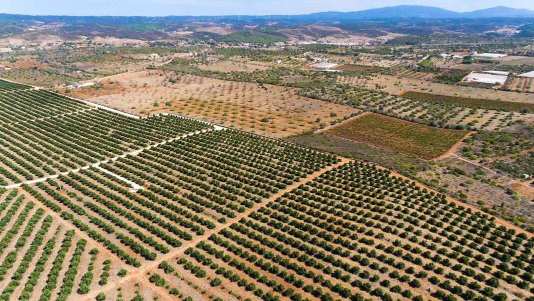 José Gonçalves, presidente da Câmara Municipal de Aljezur, manifestou ao ministro do Ambiente e à ministra da Agricultura, a sua preocupação com a implementação do cultivo do abacate, em vários locais do concelho.
