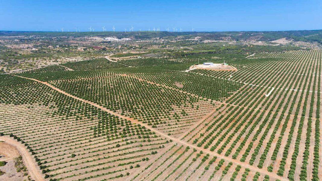 Recém-criada Regenerarte - Associação de Proteção e Regeneração dos Ecossistemas, deu entrada de uma ação judicial contra o Ministério do Ambiente, enquanto entidade de que depende a Comissão de Coordenação e Desenvolvimento Regional (CCDR) do Algarve, no dia 24 de agosto.