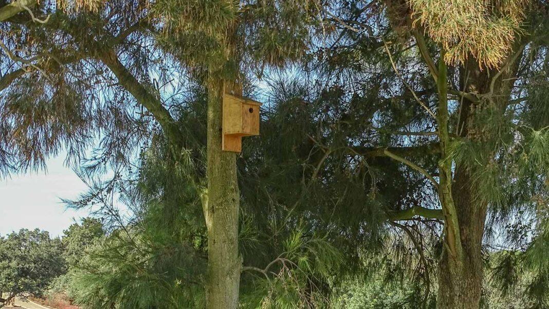 Alojamento Local para aves. Projeto que já começou a ganhar asas no final do mês de Julho e que resulta de uma colaboração entre a Associação Vita Nativa, sediada em Olhão, e o Instituto de Conservação da Natureza e das Florestas (ICNF).