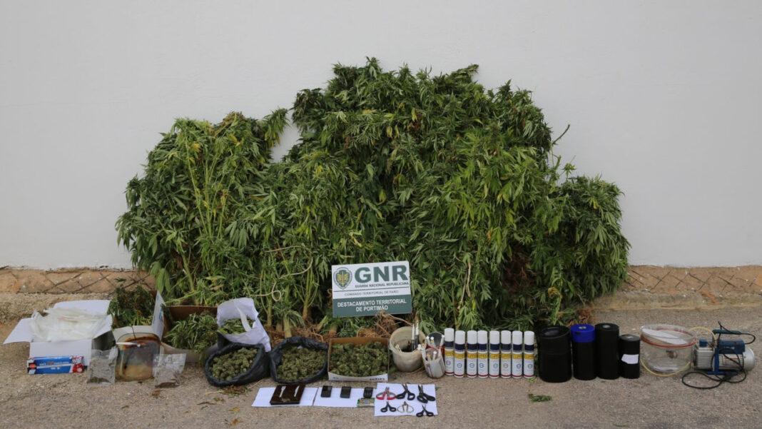GNR detém homem em Aljezur por tráfico e cultivo de canábis