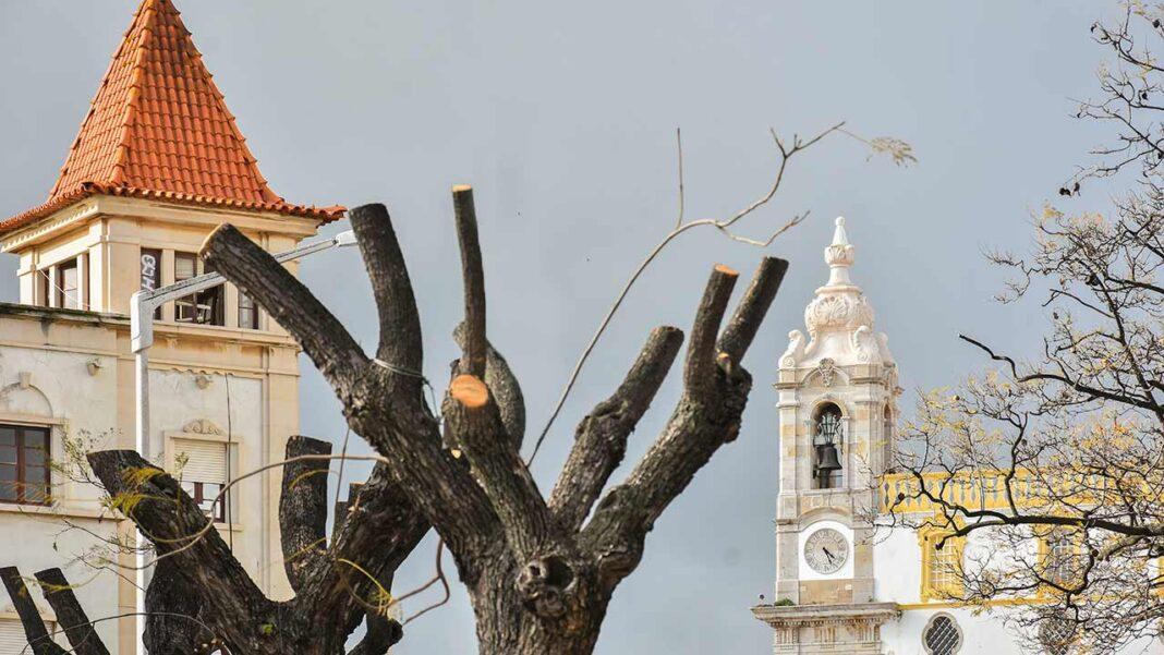 PAN aprovou georreferenciação de todas árvores do municípiode Faro e adesão à Rede de Cidades Protetoras da Terra na última Assembleia Municipal.