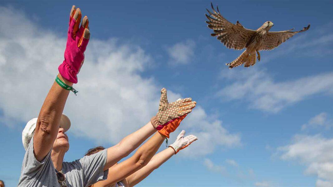 Começa amanhã, dia 2 de outubro, mais uma edição do Festival de Observação de Aves & Atividades de Natureza, em Sagres.