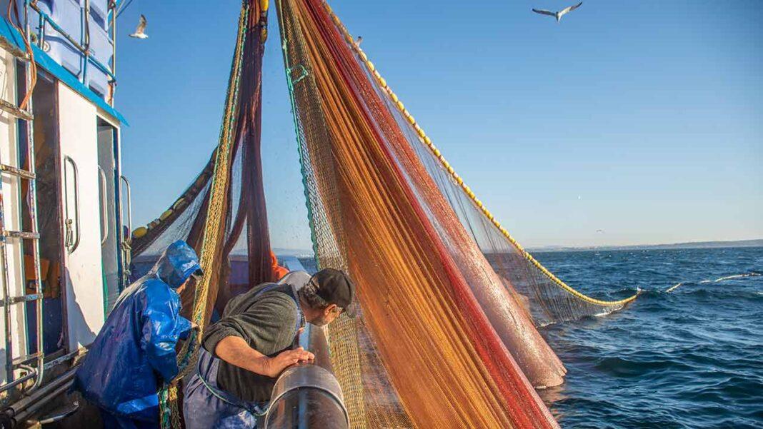 Pesca de sardinha proibida a partir de sábado, dia 10 de outubro, acontece pelo facto de terem sido atingidos os limites de captura definidos para este ano.