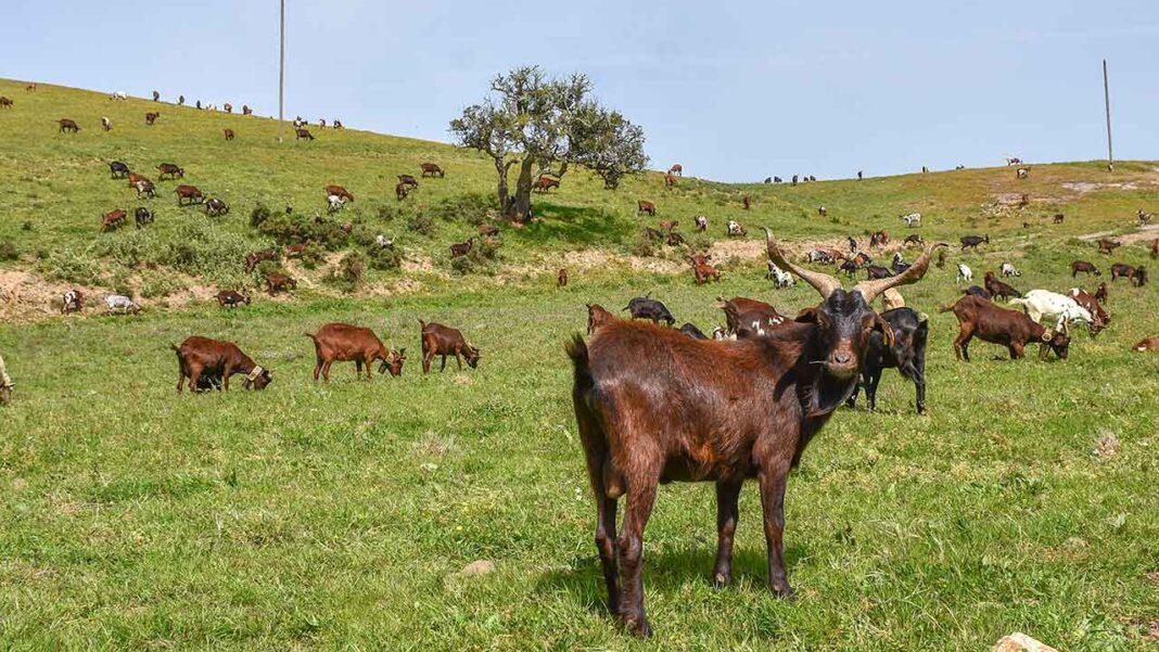 Programa GAL ADERE 2020 dinamizado pela Vicentina - Associação para o Desenvolvimento do Sudoeste, volta a abrir candidaturas de apoio aos produtores, no âmbito do Programa de Desenvolvimento Rural (PDR) 2020 Leader.