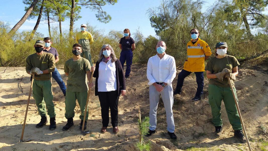 VRSA planta árvores na Mata Nacional