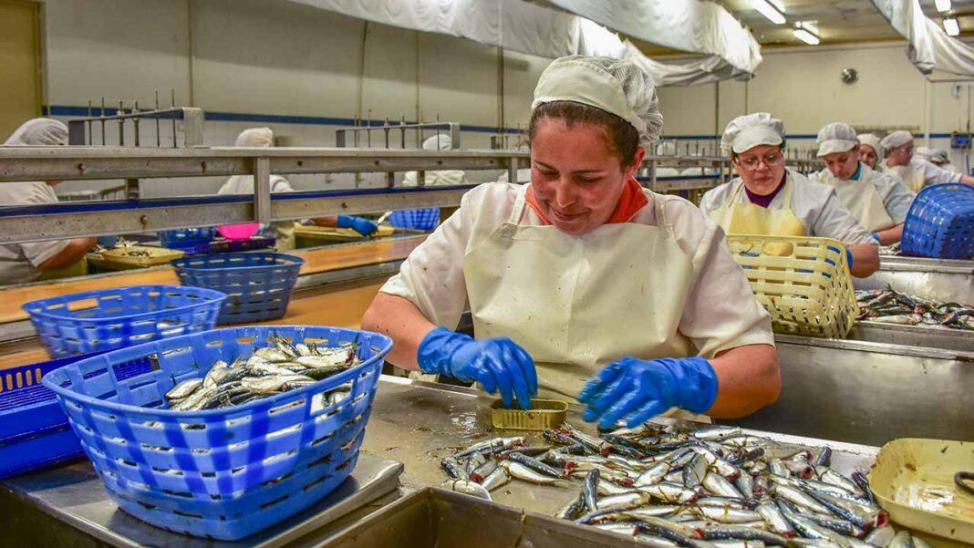 Conserveira do Sul é caso de sucesso do programa MAR 2020 segundo divulgou hoje a Direção Regional de Agricultura e Pescas (DRAP) do Algarve.