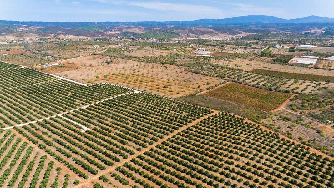 Grupo Parlamentar do Partido Socialista pretende que o governo fixe regras para novas explorações intensivas de abacate no Algarve.