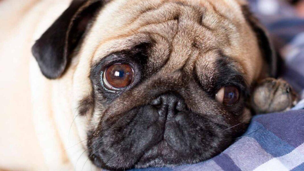 O bastonário da Ordem dos Veterinários, Jorge Cid, defende que devia haver lugares destinados a animais de estimação que ficam sozinhos devido à morte do dono para garantir que «nunca fiquem ao abandono».