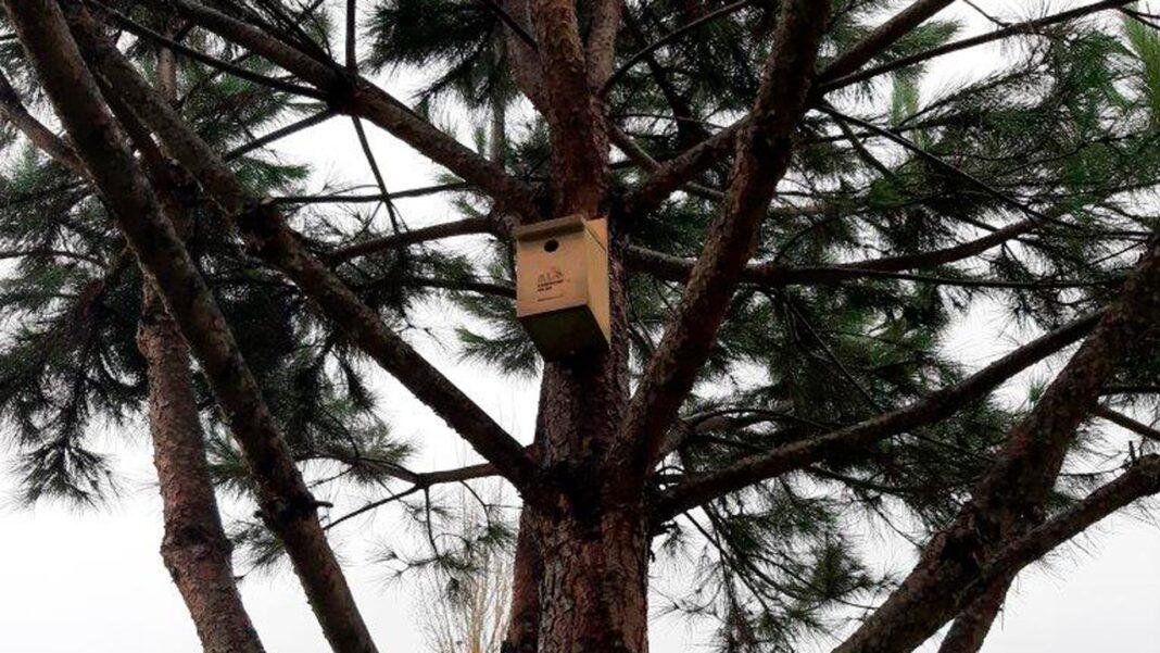 Alojamento Local para Aves - Albufeira