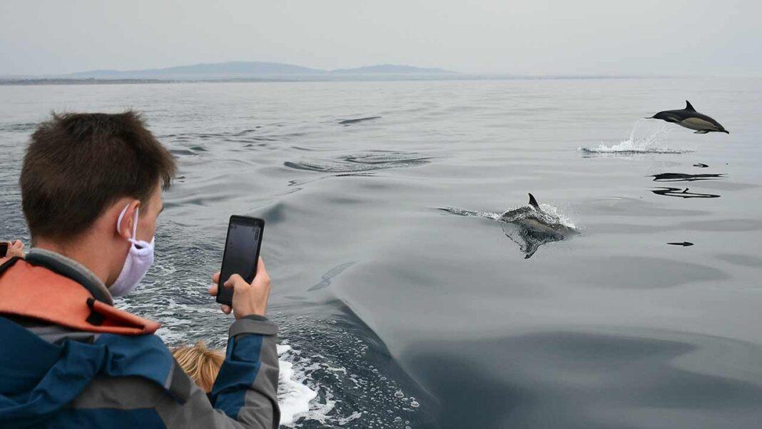 Bloco de Esquerda (BE) quer evitar conflitos de interesses entre pescadores e a conservação da natureza na futura Área Marinha Protegida de Interesse Comunitário (AMPIC) na baía de Armação de Pera.