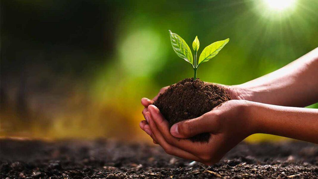 Instituto da Conservação da Natureza e das Florestas (ICNF) oferece árvores no âmbito do Dia Internacional da Floresta.
