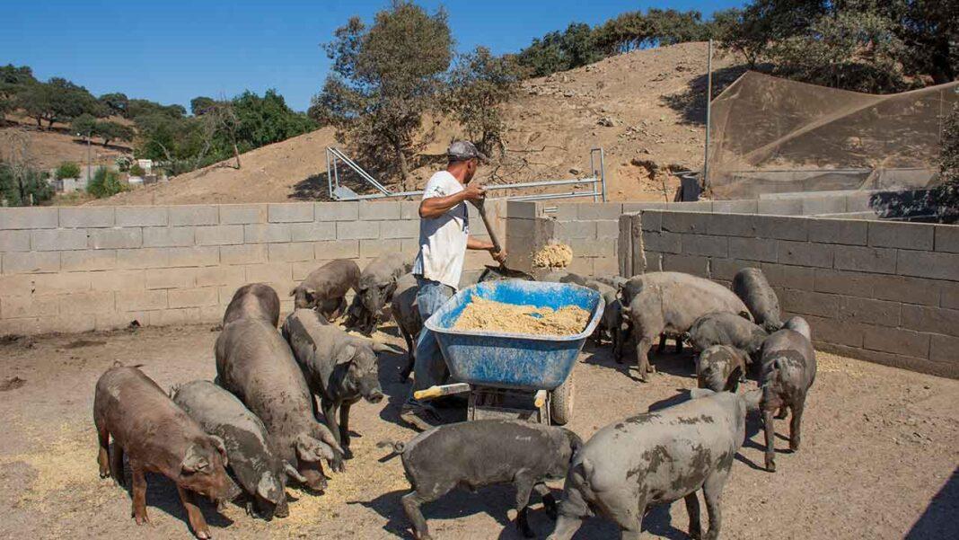 Grupo de trabalho do Ministério da Agricultura está a estudar a possibilidade de criar matadouros portáteis, instalados em plataformas TIR. Tal infraestrutura poderia impulsionar a produção pecuária algarvia e até a comercialização de carne com Indicação Geográfica Protegida (IGP).