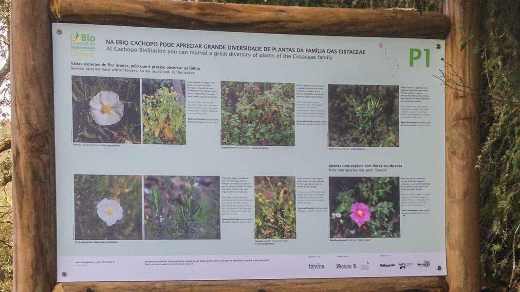 O município de Tavira, em parceria com a Junta de Freguesia de Cachopo e a colaboração da Tagis – Centro de Conservação das Borboletas de Portugal, inaugura, na quarta-feira, dia 7 de abril, a Estação da Biodiversidade de Cachopo (E-Bio).
