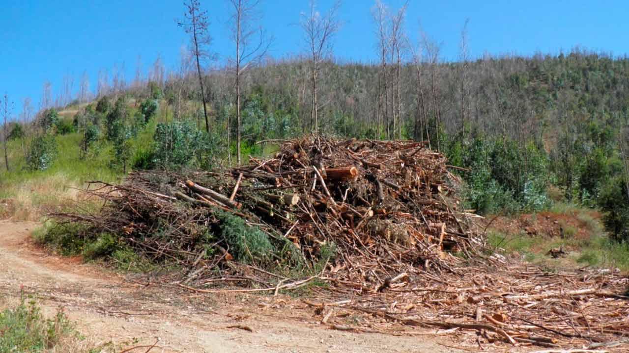 Falta de solução para madeira ardida preocupa presidente da Câmara de Monchique, empresários e proprietários florestais do concelho.