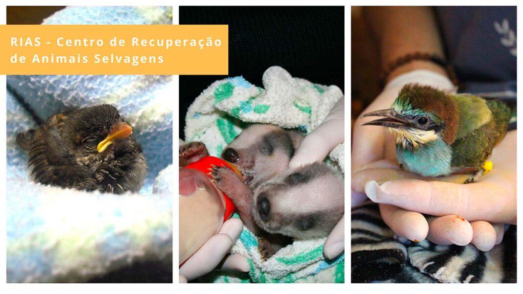 O RIAS - Centro de Recuperação e Investigação de Animais Selvagens Ria Formosa lançou uma nova campanha para financiar a assistência às crias.