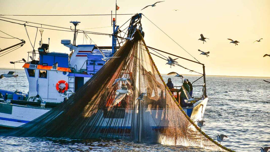 Mestres das embarcações do cerco confirmam a abundância da sardinha em toda a costa.