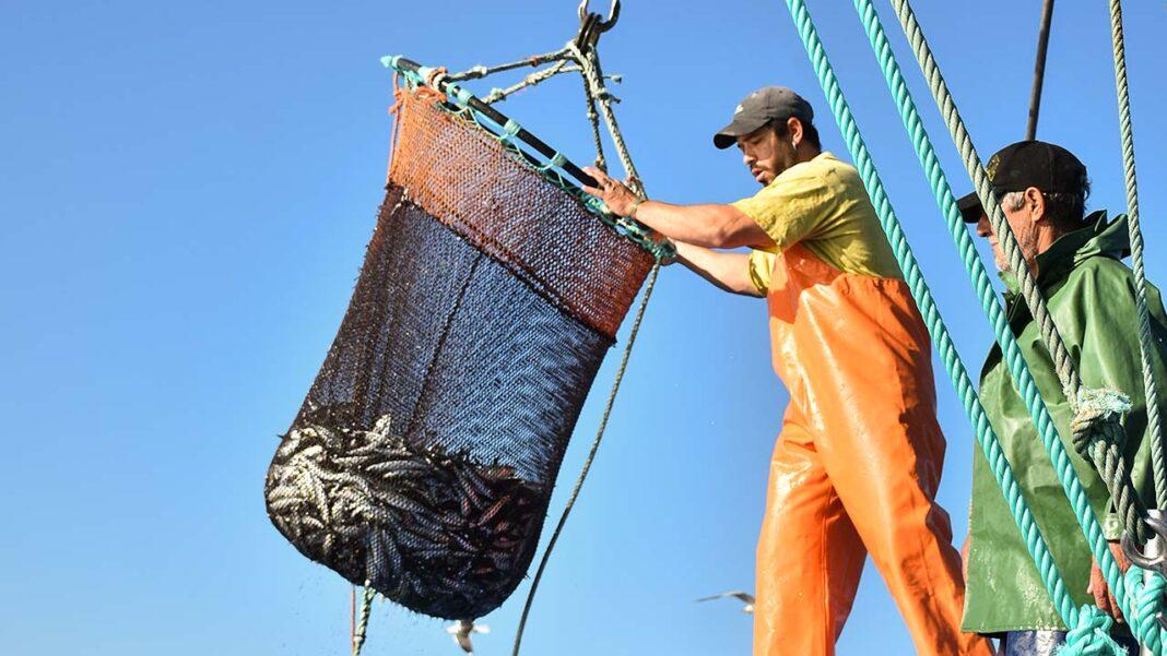 Frota nacional das embarcações de cerco dá hoje o início à safra da sardinha que será desenvolvida ao longo da costa portuguesa nos próximos meses.