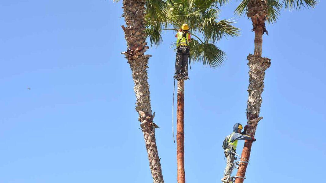 Reforço no Parque Verde do município de Faro contou com um investimento de 39.617,50 euros.