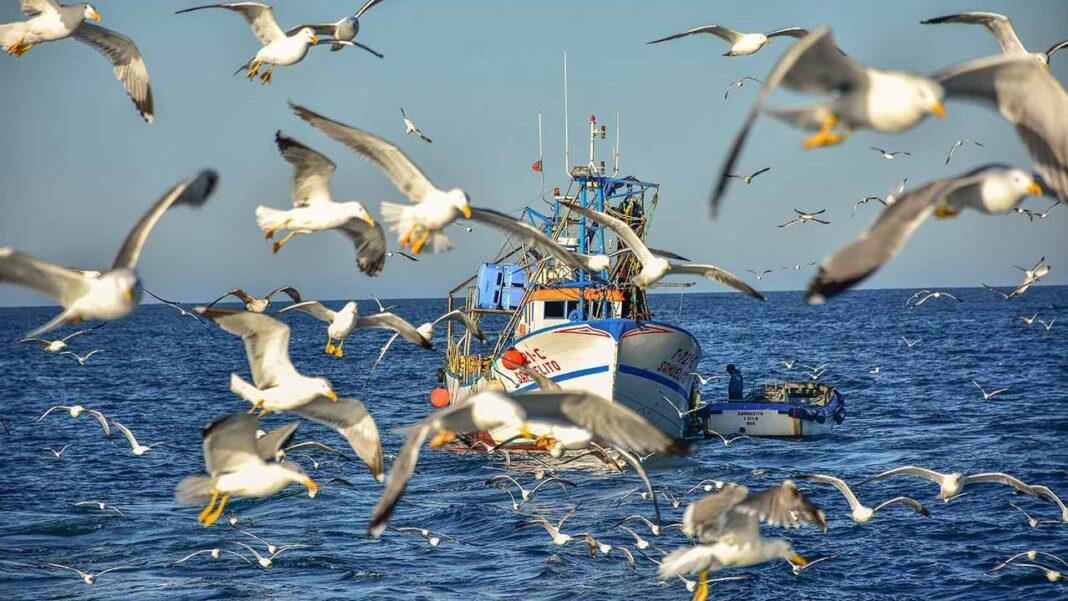 Portugal pode aumentar pesca da sardinha para 451 mil toneladas e manter faina até novembro anunciou hoje o Ministério do Mar.