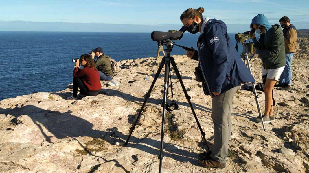 Festival de Observação de Aves & Atividades de Natureza regressa de 1 a 5 de outubro a Sagres.