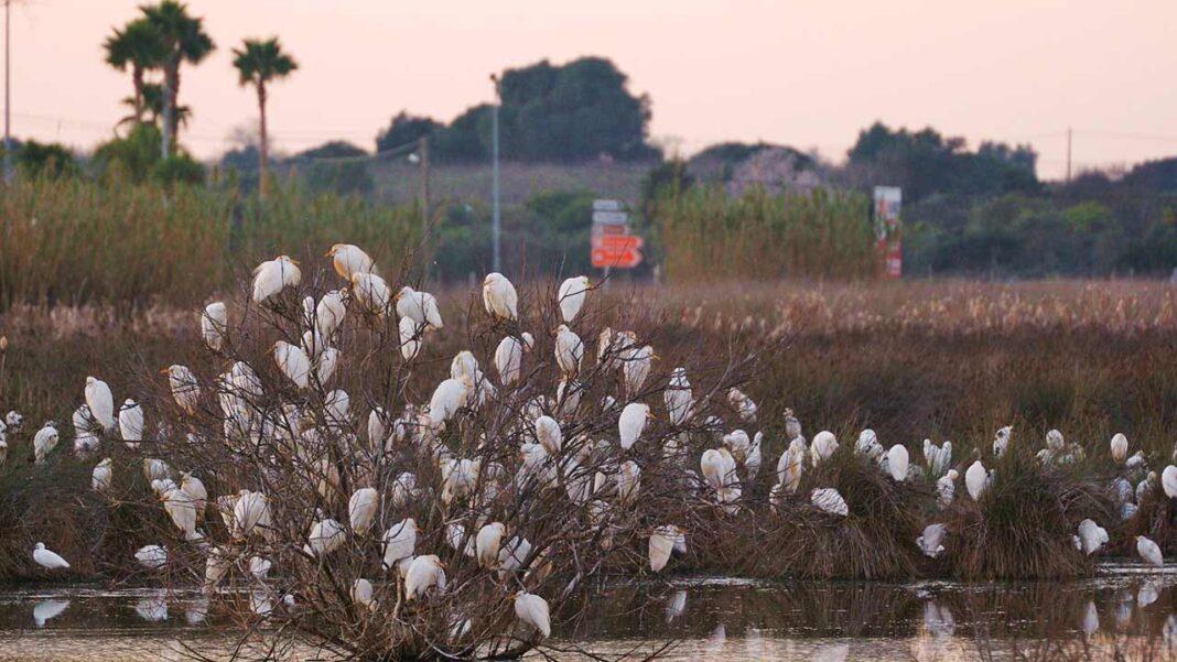A Câmara Municipal de Lagoa refuta o comunicado conjunto da Almargem e a Associação Cívica Cidade da Participação sobre o caso das Alagoas Brancas.