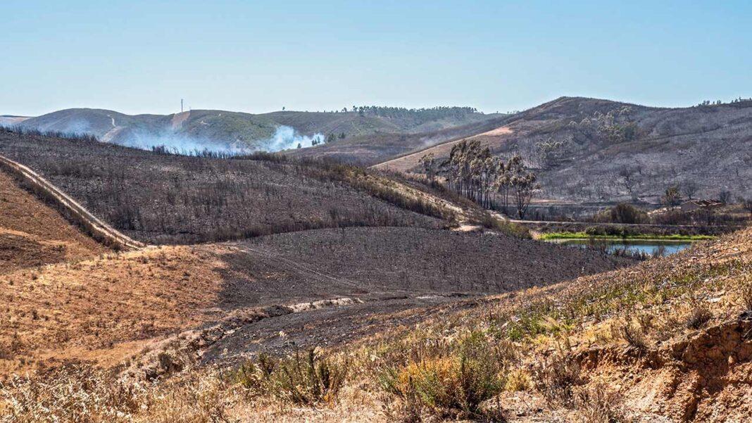 Projeto Renature Monchique, responsável pela replantação da Serra de Monchique desde 2019, reforça apoio à comunidade, face ao incêndio do passado fim de semana.