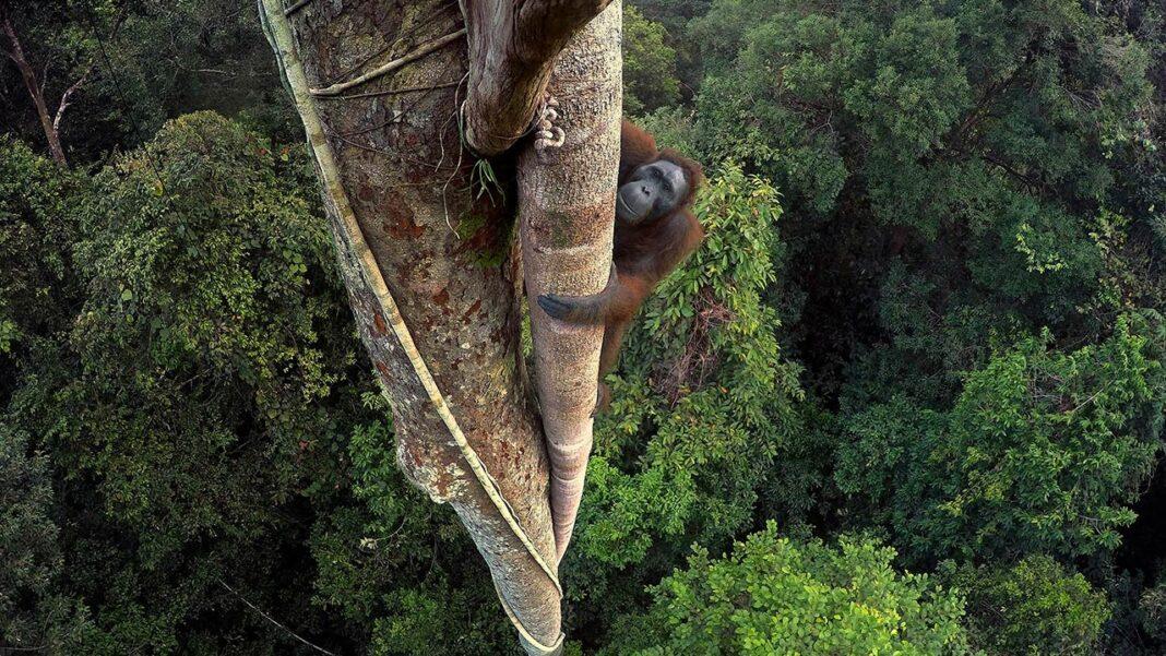 «De Polo a Polo» faz uma viagem fotográfica aos últimos paraísos naturais do Planeta pelos fotógrafos da National Geographic. Patente na zona ribeirinha de Portimão até 8 de setembro.
