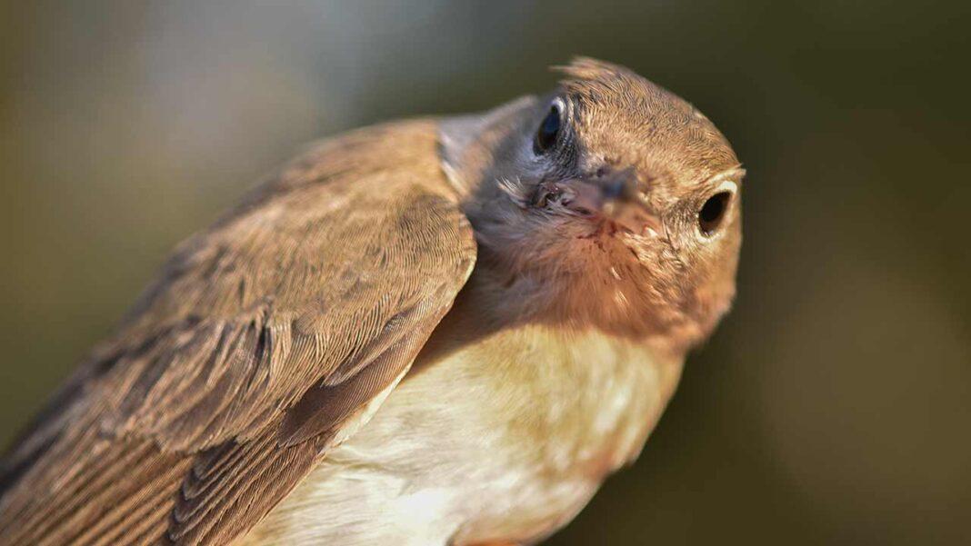 O município de Lagoa promove uma caminhada de observação de aves no Sítio das Fontes, em Estômbar.