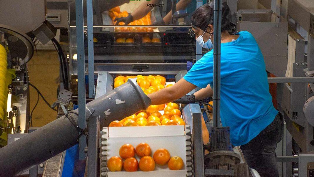 Os problemas dos trabalhadores algarvios «são estruturais e agravaram-se ao longo dos anos» alerta hoje a USAL/CGTP-IN num longo documento que o barlavento publica na integra.