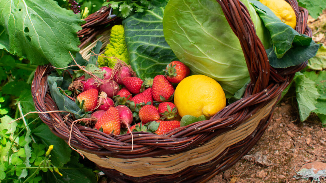 Frutas e Legumes - Almancil