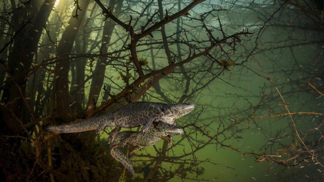 João Rodrigues, realizador, fotógrafo e jornalista da empresa algarvia Chimera Visuals, é o primeiro portuguès a ganhar o primeiro prémio Wildlife Photographer of the Year.